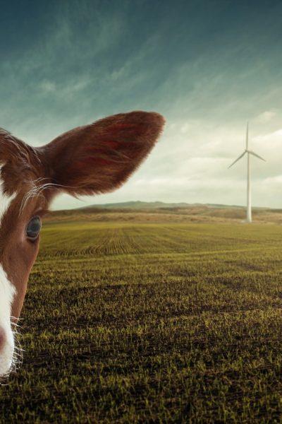 revue-transitions-energies-renouvelables-biodiversite