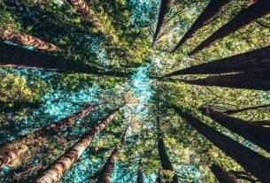 La compensation carbone représente aujourd'hui un marché de près de 200 millions de dollars annuels.
