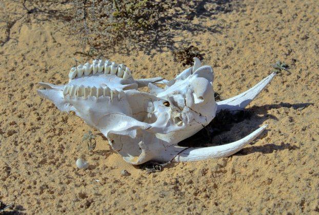 sixieme extinction de masse