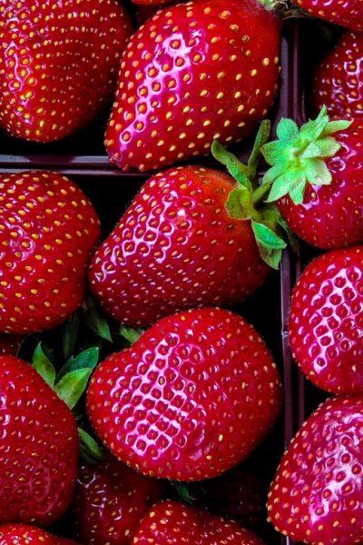 De jolies fraises. (Photo : Unsplash)