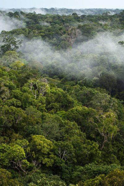 Amazonie CO2